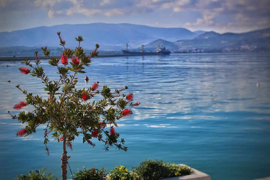 Nuture Bestplace Flowers Flower Photography Summerflowers Sea And Sky Seascape Photography Skyporn