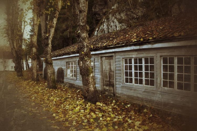 """All that is gold does not glitter. Not all those who wander are lost; The old that is strong does not wither. Deep roots are not reached by the frost"". (Tolkien) EyeEm Nature Lover Beauty Of Decay Nature_collection Melancholic Landscapes Autumn Fall Colors"