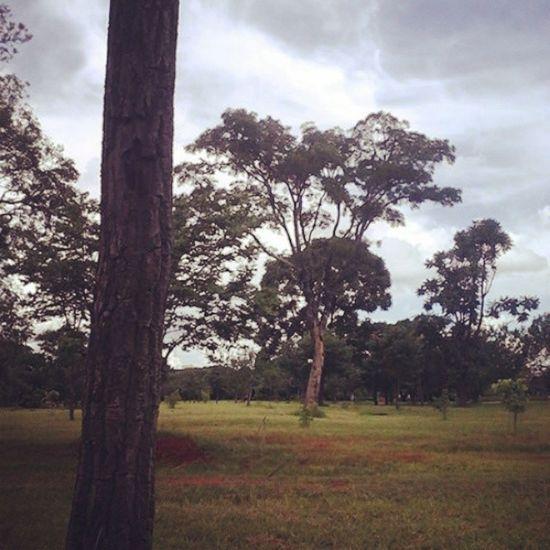 Brasil Brazilian Bras ília Bsb df love natureza nature parque parquedacidade park parkofcity