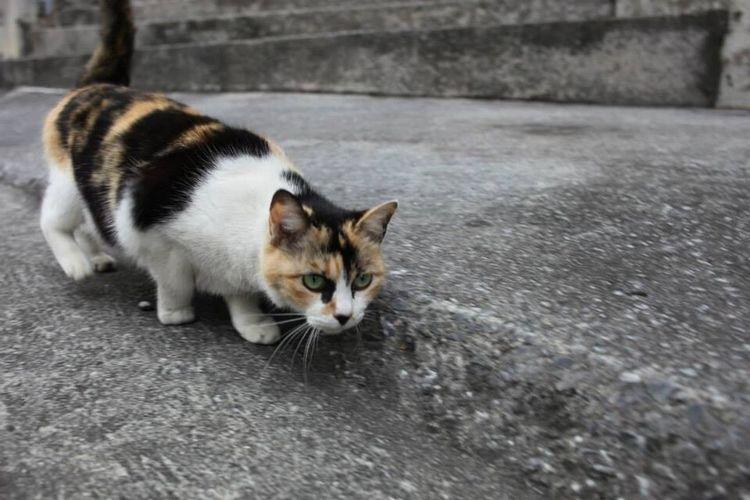 猫 Cat ねこ 可愛い Cute 沖縄 Okinawa スナップ 日本 Japan オキナワ Snap Sakurazaka 桜坂 何を狙っているかと言うと、目の前でボール遊びをしている子供達のボールを狙うっていうねw