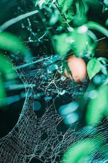 Spider Web Spider Close-up Green Color No People Fragility Vulnerability  Pattern Full Frame Glass - Material Nature Backgrounds Plant Focus On Foreground Spider Web Extreme Close-up Dew Indoors  Complexity Day Textured
