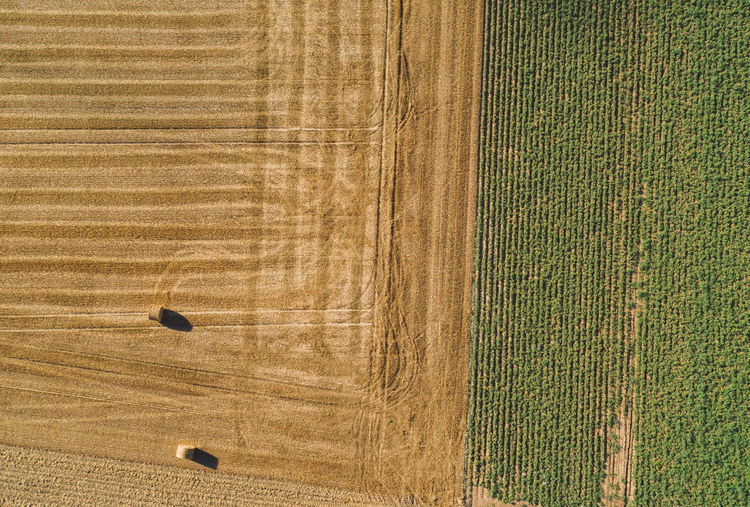 Directly Above Aerial Shot Of Hay Bales On Agricultural Field
