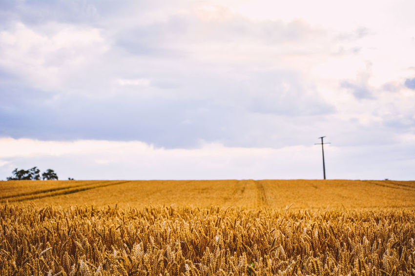 Agriculture Arid Climate Beauty In Nature Cloud Crop  Distant Environmental Conservation Farm Field Horizon Over Land Landscape Natural Beauty Nature Nature Photography Outdoors Perspective Photography Popular Popular Photos Remote Rural Scene Scenics Sky 43 Golden Moments Tranquility