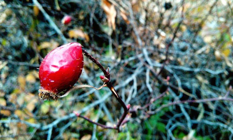 Goolboornoo / iran / zanjan Iran Zanjan Day Red Nature Beauty In Nature