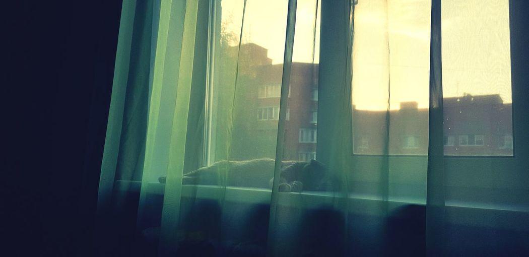 c❤t Green Sun