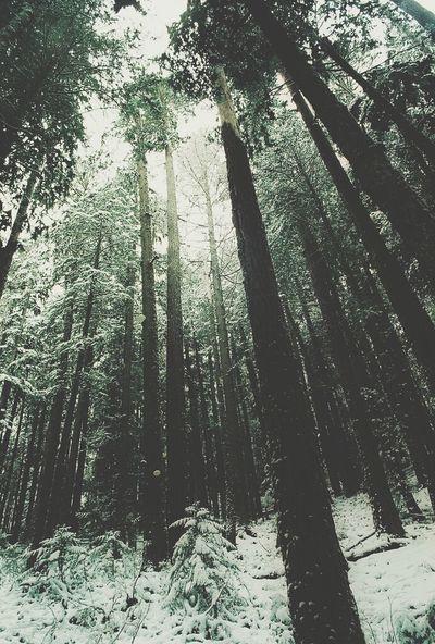 Landscape Wood Tree Beautiful