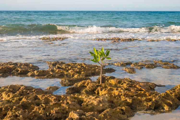Cuba Growth Plant Beach Beauty In Nature Day Horizon Over Water Maria La Gorda Nature No People Outdoors Sand Scenics Sea Sky Tranquility Water Wave