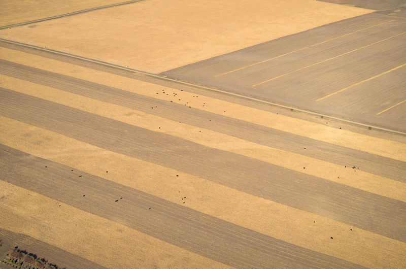 Pattern High Angle View Aerial View Aerial Aerial Photography Aerial Shot Environment Landscape Backgrounds Corn Cornfield Field Farm Farming Livestock Cows Cattle Beef Meat Stripes Harvest Ethanol Feeding Animals Food