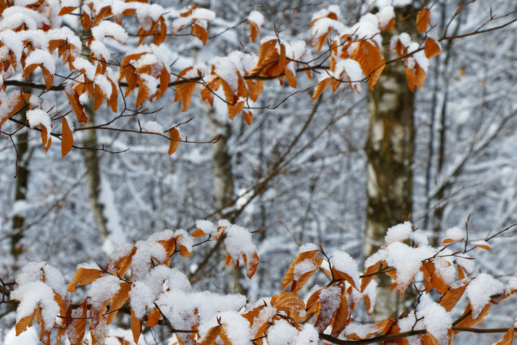 Snow covered trees during autumn