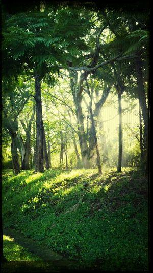 Luz entre árboles Relaxing Morning Light And Shadow