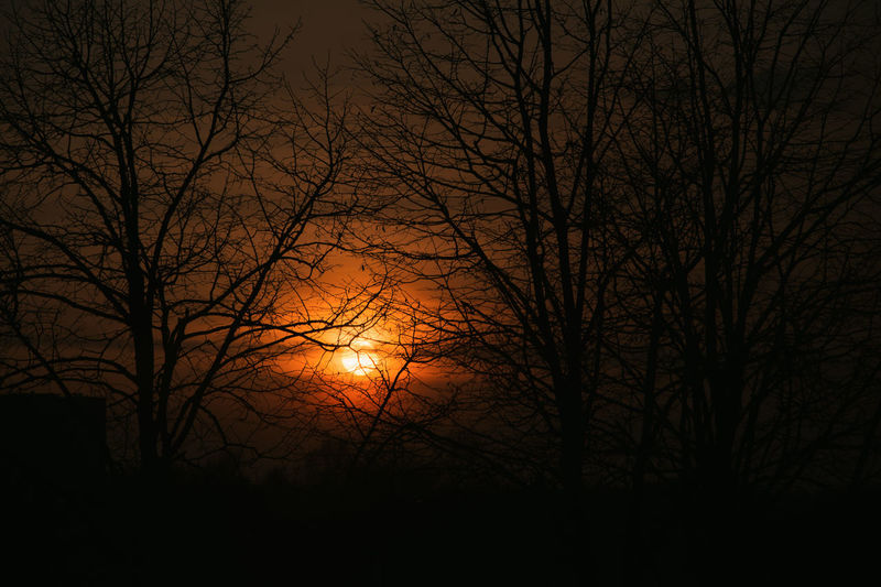Bare Tree Tree Silhouette Sky Scenics - Nature No People Tranquility Night Plant Nature Beauty In Nature Branch Outdoors Tranquil Scene Low Angle View Dark Moon Sunset Backgrounds Moonlight Eclipse