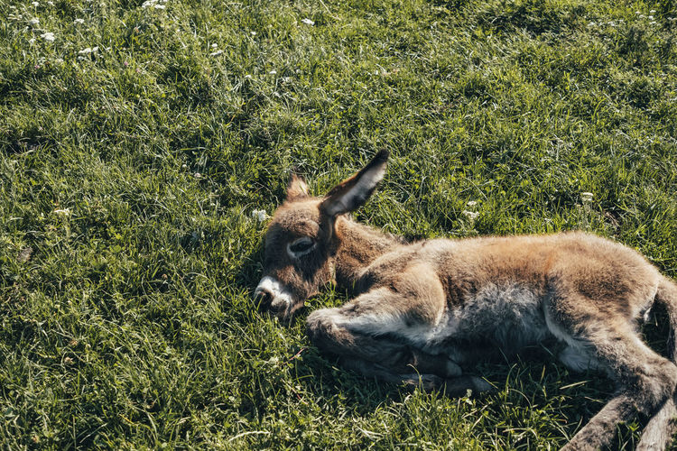 Mammal Animal Animal Themes Plant Grass Vertebrate Animal Wildlife One Animal Field Animals In The Wild Land Domestic Animals Relaxation Day Nature Green Color No People Livestock Pets Domestic Outdoors Herbivorous