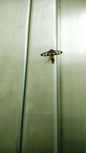 Not sure what insect is this but this is random picture taken in the elevator testing my new phone's camera. Enjoying Life Appreciating Nature Randomshot Taking Photos Nature Everyday Lives Plain & Simple Urban City Insects  Insect Photography