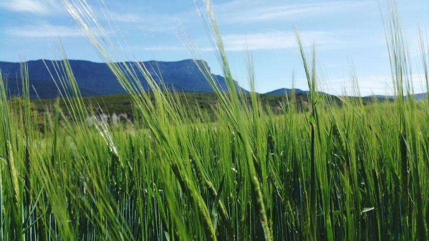 Growing Better Monte Oroel Jaca Monte Orel SPAIN Pyrenees Aragón Huesca