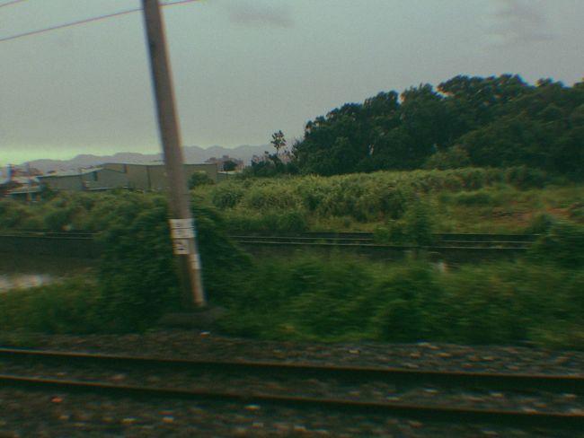 #구닥 #카메라 #카메라그램 #필림 #film #gudak #gudakfilm Tree Day