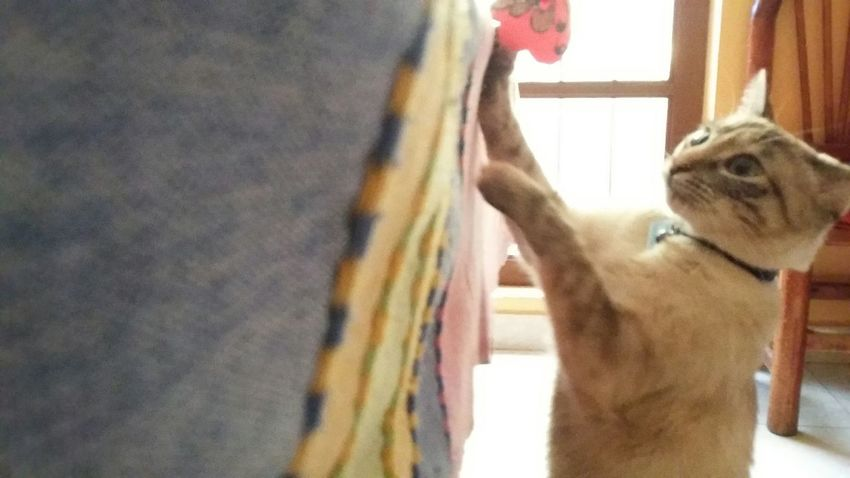 Taking Photos No Filter Cat Sunny Pets Cute My Cat Blue Eyes Cute Pets Animals