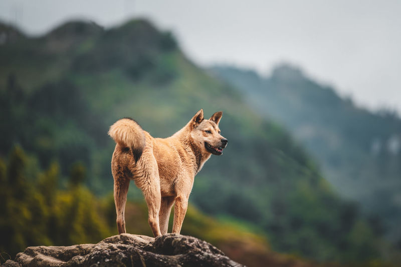 View of a dog on rock