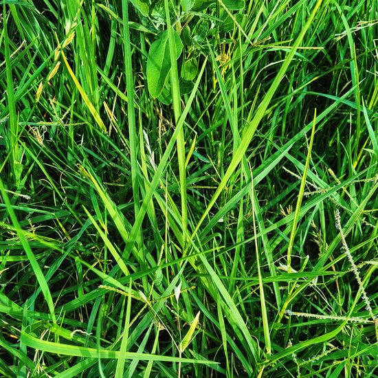 Green Color Nature Growth Grass No People Outdoors Field Close-up Beauty In Nature Freshness