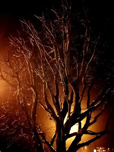 tree in the night light The Creative - 2018 EyeEm Awards