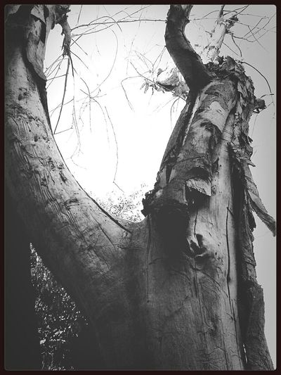 Shades Of Grey EyeEm Nature Lover Tree Porn Death Nature
