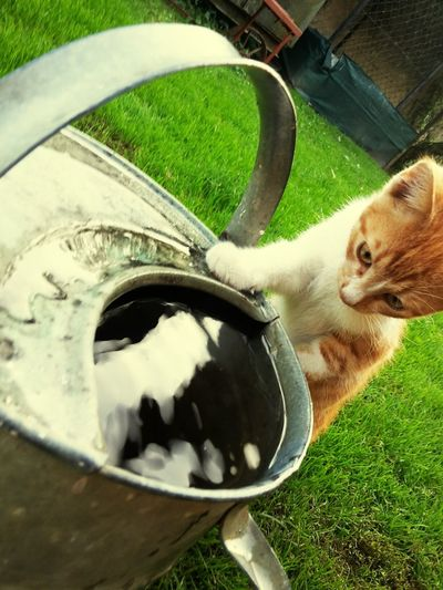 Water Grass One Animal Pets Sky Green Color Eye4photography  Cat♡ Love❤