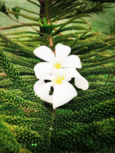 What is flower..???