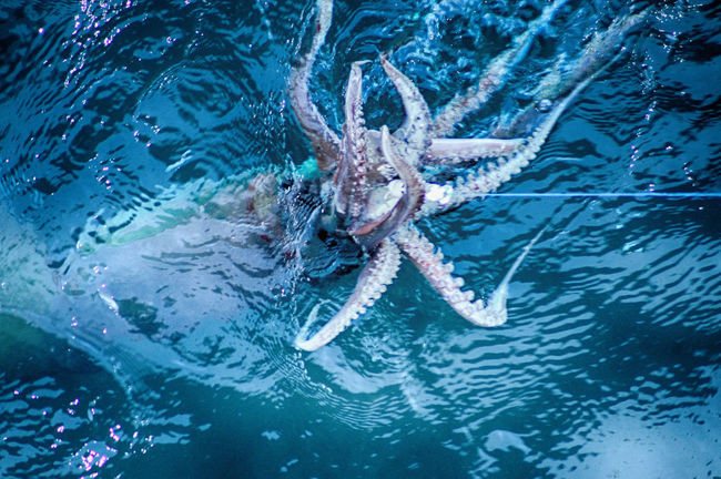 Out of focus shot while squid fishing. Animal Animal Themes Animal Wildlife Aquatic Beauty In Nature Blue Close-up Day Nature No People Outdoors Rippled School Of Fish Sea Life Squid Squid Fishing Squids Squidward Swimming Turtle Water Wildlife Zoology
