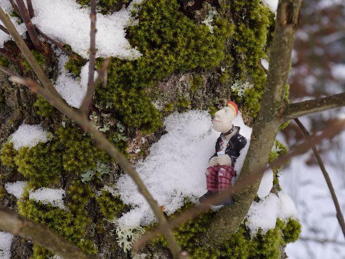 Punk Winter Wonderland Enjoying Nature Getting Inspired EyeEm Gallery Eye4photography  Snow ❄ Wintertime Lovethewayyousmile Trees