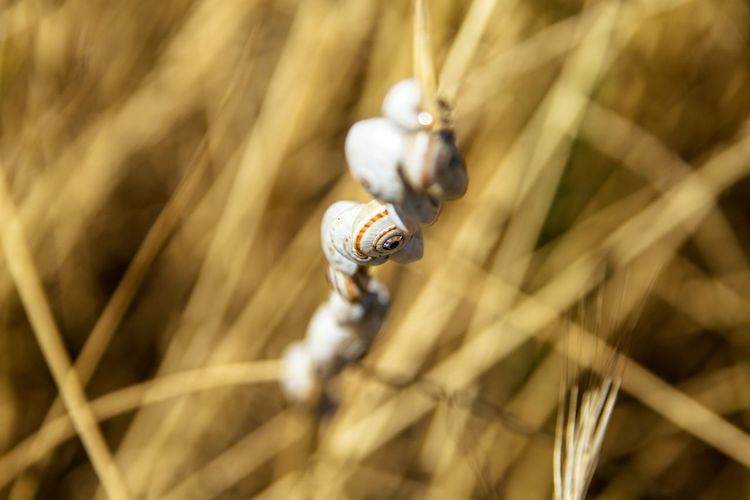 Close-up of snails on stem