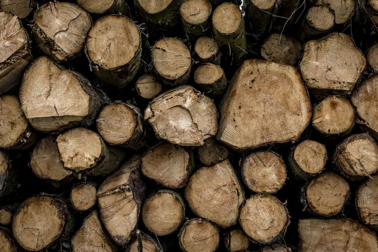 Abundance Backgrounds Close-up Day Deforestation Environmental Issues Firewood Forestry Industry Fossil Fuel Fuel And Power Generation Full Frame Heap Large Group Of Objects Log Lumber Industry No People Pile Shape Stack Textured  Timber Tree Ring Wood Wood - Material Woodpile