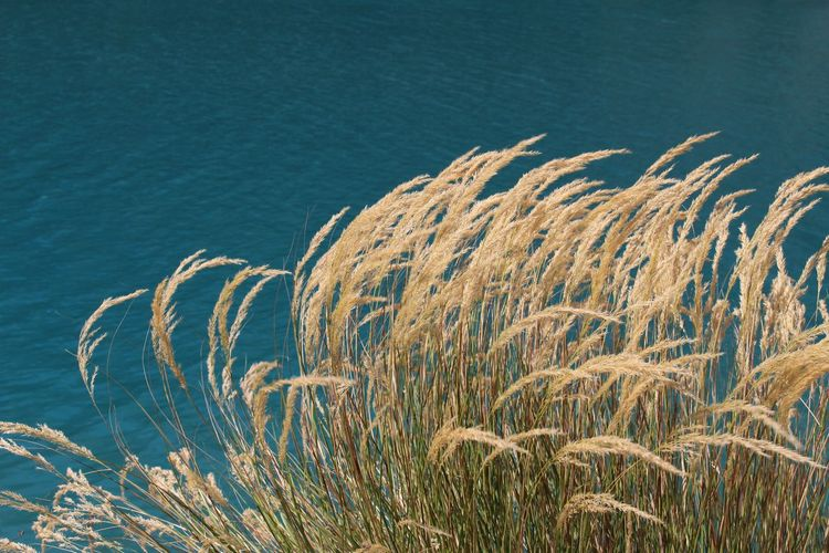 Close-up of reed growing on shore