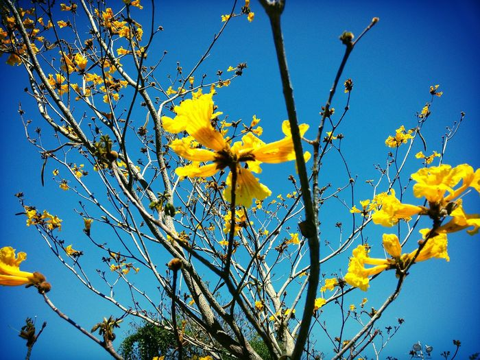 Photo CeuAzul Tree Winter Nature_collection Nature Photography Bluesky Brasil Beautiful Nature Flowers,Plants & Garden