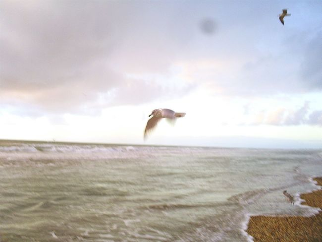 My Best Photo 2015 Taking Photos Enjoying Life Seagulls Cocoa Beach Florida Beautiful Nature Serene Showcase: December Photos By Jeanette Greatest_shots Great Day  Ocean Ocean ViewAwesome_view Pastel Colors Day Out Pastel Power Photography In Motion Landscape With Whitewall The Essence Of Summer Natures Diversities Summer Summertime The Week On EyeEm Lost In The Landscape