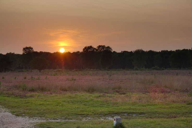 Sunset at Westerheide Beauty In Nature Day Field Grass Growth Heather Landscape Nature No People Outdoors Scenics Sky Sun Sunset Tranquil Scene Tranquility Tree