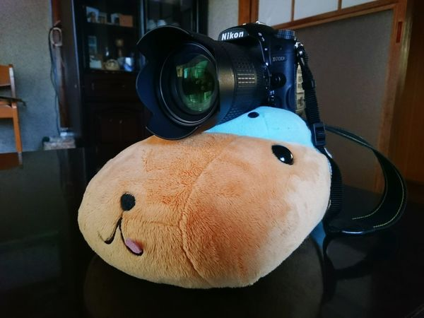 Favorite Kapibara Nikon D7000 Icon Cute Plush Fluffy New Icon Blown Camera