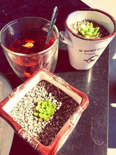 Cup of tea, bottles of plants > < Enjoying Life Enjoying Nature