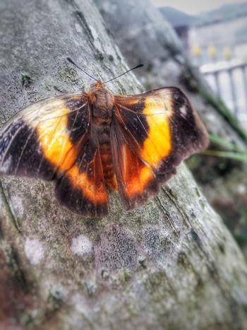Natureza Natureza 🐦🌳 Nature BORBOLETA Batterfly  Borboletas EyeEmNewHere