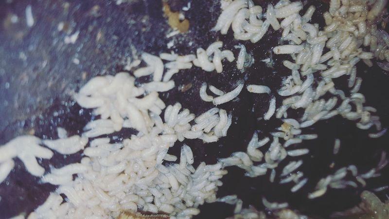 Whatever you think #warm #unique #Nature  #flower#garden#nature#ecuador#santodomingoecuador#eyeEmfollowers#iphoneonly#nofiltrer#macro_garden#pretty#beautiful#followme#sho #likeforlike #likemyphoto #qlikemyphotos #like4like #likemypic #likeback #ilikeback #10likes #50likes #100likes #20likes #likere Snowflake Backgrounds Full Frame Winter Snow Microscope Close-up