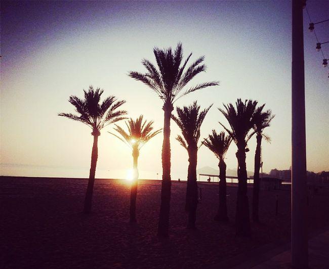 Buenos Nachos enjoy tu eveningo Palmtree🌴🌍😊💕 En La Playa