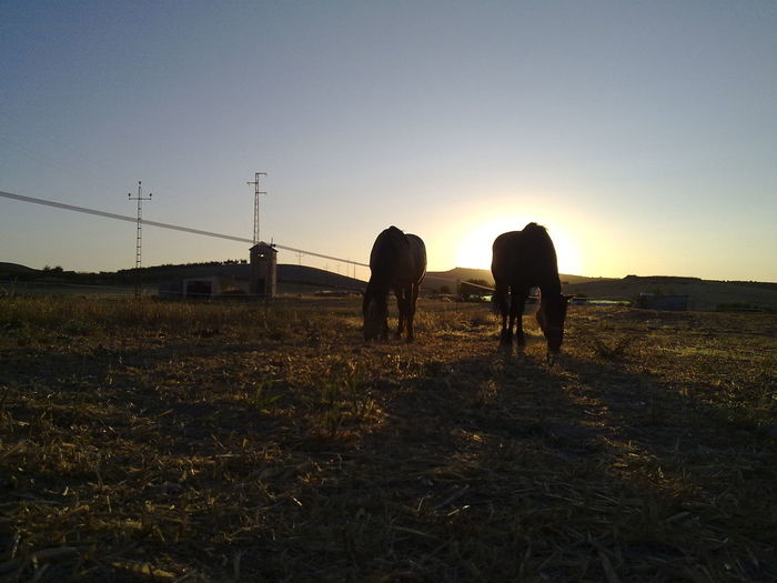 Adventure Backlight Beauty In Nature Clear Sky Day Field Full Length Grazing Horses Landscape Leisure Activity Lifestyles Mammal Men Nature Outdoors Rural Scene Silhouette Sky Sunset Togetherness Two Animals