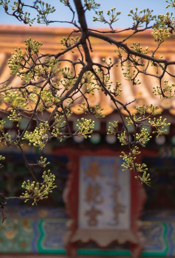 No People Day Growth Outdoors Nature Architecture Building Exterior Beauty In Nature Beijing Freshness Tree Branch Nature The Palace Museum The Forbidden City  故宫 Growth Spring