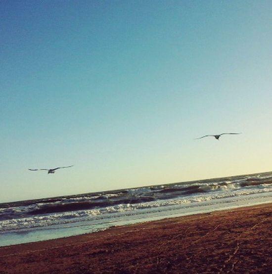 Se que a veces, los que se van, mandan pequeños espías para ver como va la vida aquí abajo Life Is A Beach Enjoy The Sun