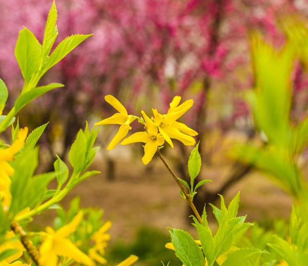 Beauty Spreading Out Beauty In Nature Blooming Close-up Day Flower Flower Head Fragility Freshness Growth Nature No People Outdoors Plant Yellow