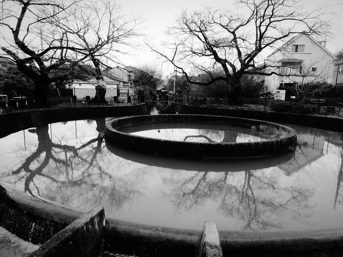 Cylinder Diverted Water Water Water Reflections Reflection Black & White Monochrome Trees