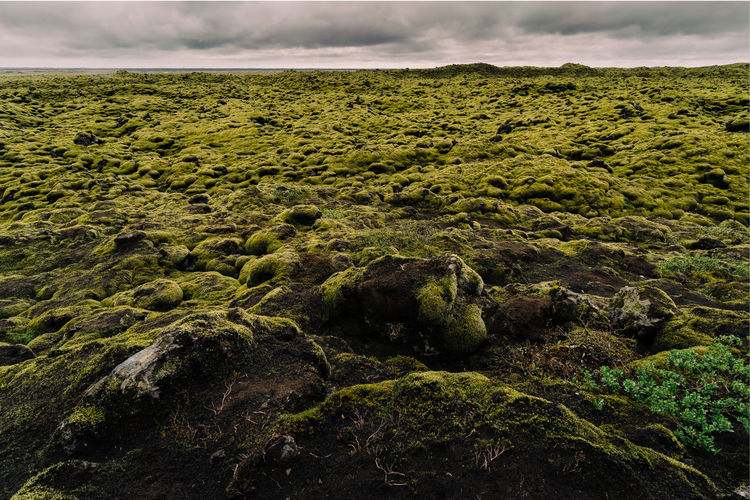 Moss Fields Desert Endless Iceland Nature Travel Walk Beauty In Nature Close-up Cloud - Sky Day Flat Green Color Landscape Lava Mood Moss Nature No People Outdoors Overcast Sky Travel Destination Wide