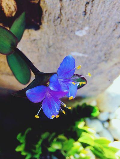 Blue Flower Flower Fragility Petal Beauty In Nature Nature Growth Purple Flower Head Day