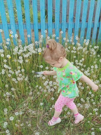 Green Color One Girl Only Babies Only My Little Princess ♡  Outdoors Freshness One Person Dandelion Field