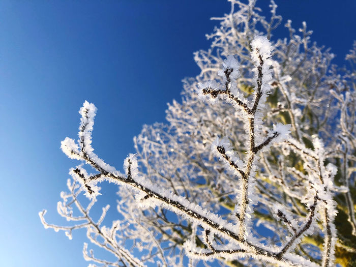 Close-up of frozen plant against blue sky