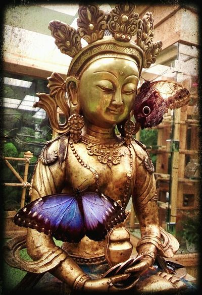 Будда бабочка сад восток статуя Buddha Butterfly Garden Mobile Photography East Statue