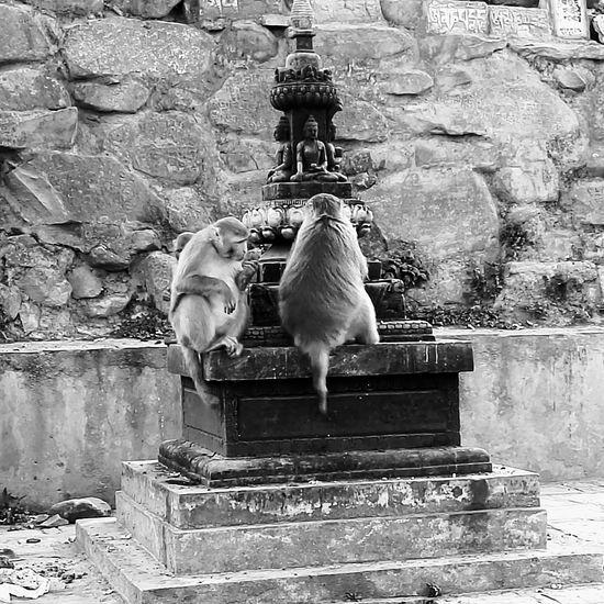 Monkey Nepal Travel Nepal Nofilter Monkeytemple Cabincrew Layovers Flydubai First Eyeem Photo EyeEm Selects